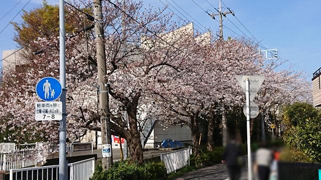 入学シーズン~桜並木で思うこと~
