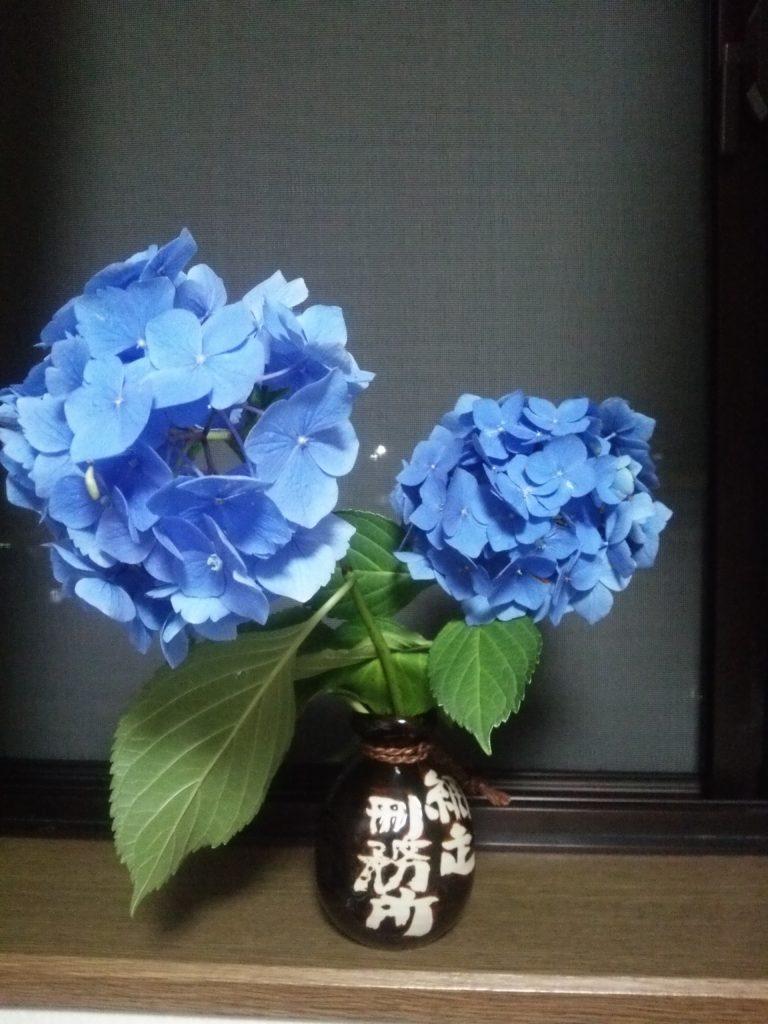思い出の紫陽花(あじさい)